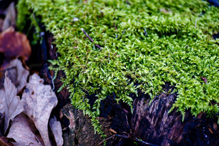 Moss in the forest close-up