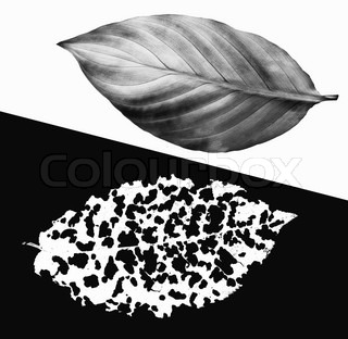 Black and white image concept collage from leaves