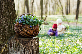 An image of basket with flowers in the woods