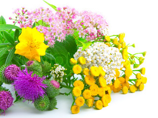 a bouquet of wildflowers,on white background