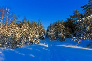 Samlet russisk vinter