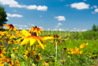 beautiful meadow flowers on a sunny day