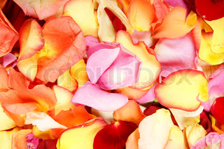 Bright spa background with a lot of different petals