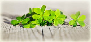 Fresh clover leaves over wooden background, green spring floral border, lucky shamrock, StPatrick's day holiday symbol