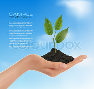 Young plant in hand  Vector illustration