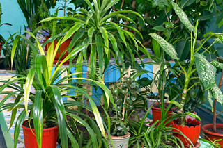 many house plants in pots