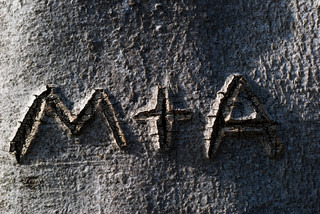 M and A in bark