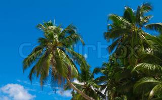 Palms Planter Jungle