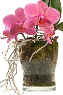 Orchid glass jar