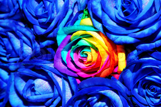 background of creative blue roses
