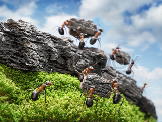 team of ants costructing Great Wall, teamwork concept