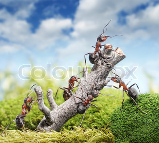 team of ants breaking tree