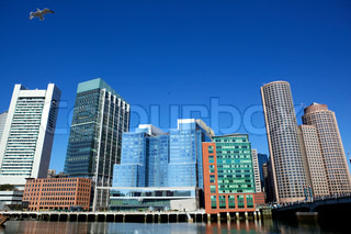 Office buildings and flying gull in Boston city