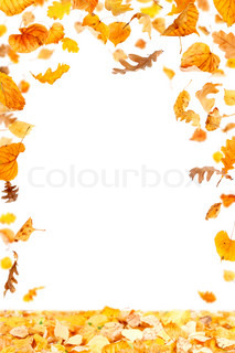 Falling Leaves Frame