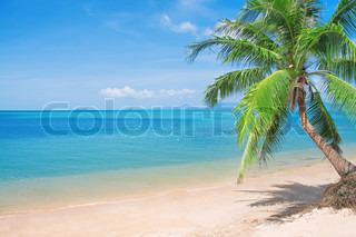 Beaautiful Strand mit Kokospalmen und Meer
