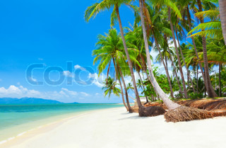 tropical beach with coconut palm trees Koh Samui, Thailand