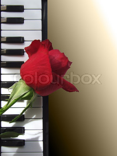 Beautiful rose lying on the piano keys on sepia toned background