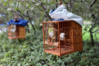 Songbird in cage Shanghai People's Square Park, China
