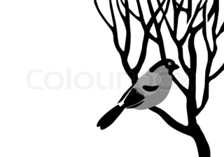 bullfinch silhouette on wood branch