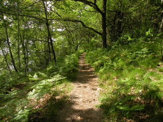 path, trail through the woods in summer sunshine