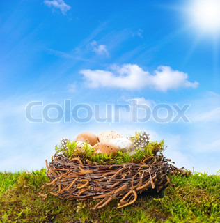 nest with eggs and birds feather on green gras
