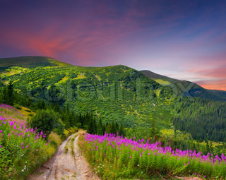 Beautiful summer landscape in the mountains with pink flowers Sunset