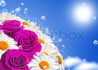 Daisies and roses