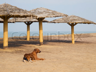 Dogs lying on the beach