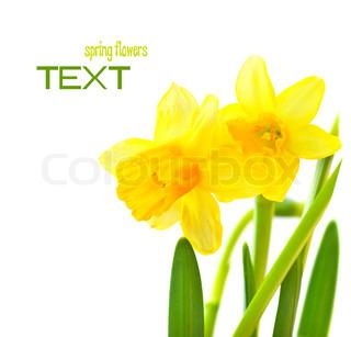 Frühling Blumen Grenze