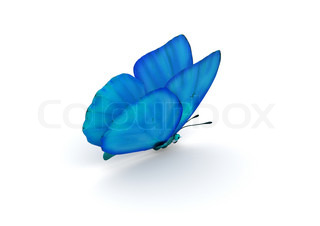 Blue Butterfly Isoleret