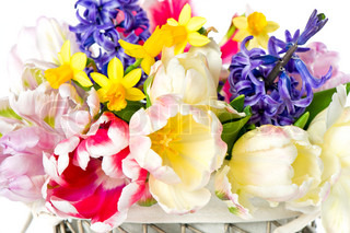 tulips, narcissus and hyacinth colorful spring flowers