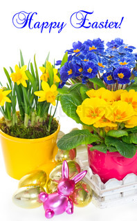 spring flowers with easter decoration