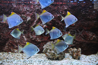 exotische Meeresfische