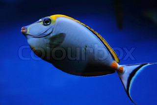 exotic sea fish