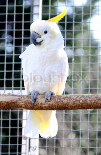 Decorative cockatoo in his aviary