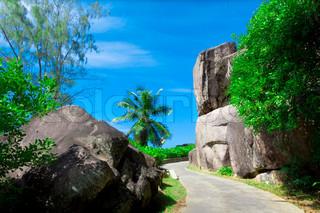 Billede af 'have, haver, Palms'