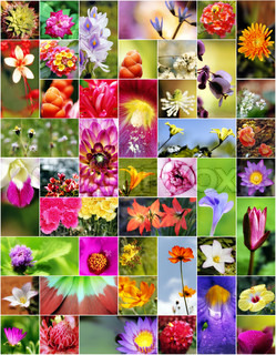 Collage of flowers in different shapes, colors and designs