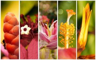 Collection of flowers close up with shallow depth of field