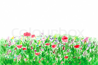 Summer flowers in the garden watercolor isolated on white