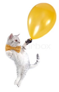 cat kitten silver tabby flying with a golden balloon