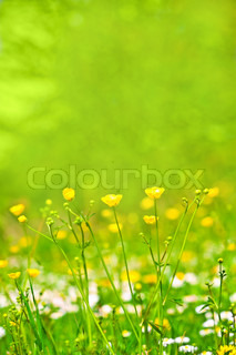 abstract background of spring grass and flowers