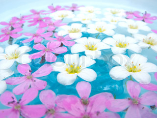 White and Pink Flowers Floating on Water