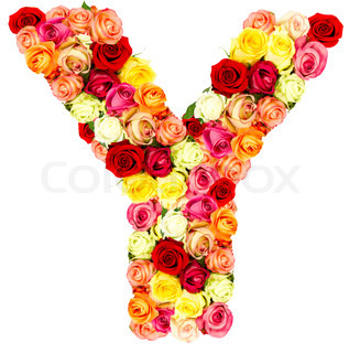 Z Alphabet In Rose roses flower alphabet, stock photo