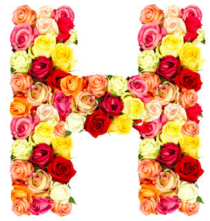 Z Alphabet In Rose Letter H flower alphabet. Isolated on a white background, stock photo
