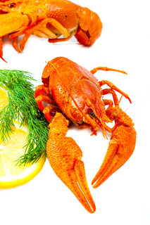 Red crawfishes with lemon and dill