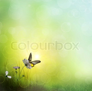 background of grass Butterfly on a Flower