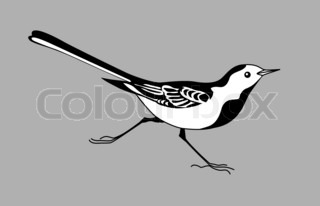 wagtail silhouette on graybackground