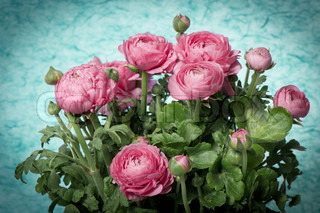 beautiful bouquet of spring flowers pink ranunculus