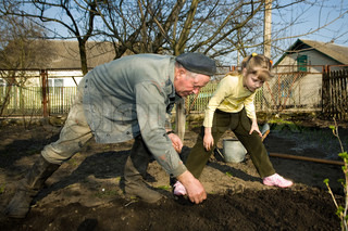 An old peasant working in his kitchen garden and his little granddaughter helping him