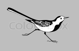 wagtail silhouette on graybackground, vector illustration